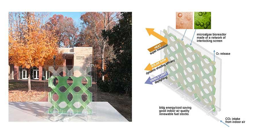 Microalgae project awarded NSF grant