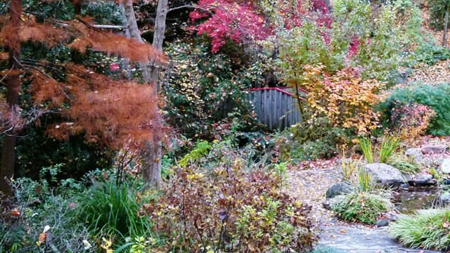 The Annual UNC Charlotte Botanical Gardens Fall Plant Sale Is Set For 9  A.m. To 3 P.m., Friday And Saturday, Oct. 13 14. A Preview Sale Will Be  From Noon To ...