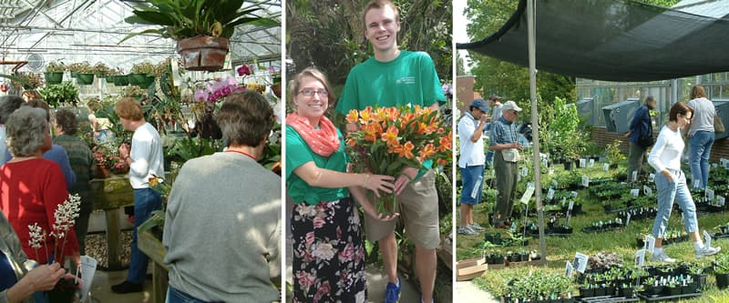 Botanical Gardens to hold annual spring sale | Inside UNC Charlotte ...