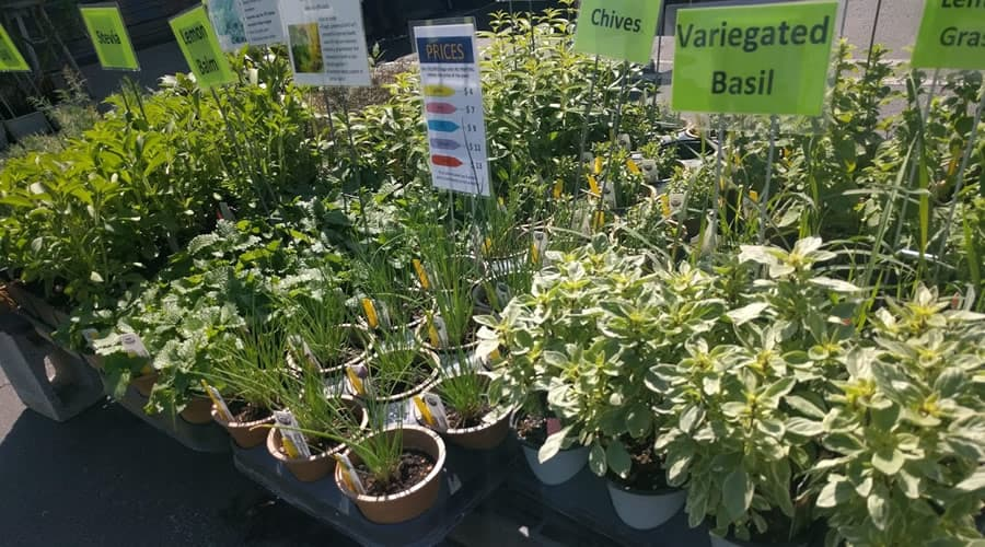 Botanical Gardens Spring Plant Sale moves to new location
