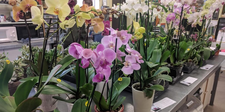 Annual Valentine's Day Orchid Sale scheduled
