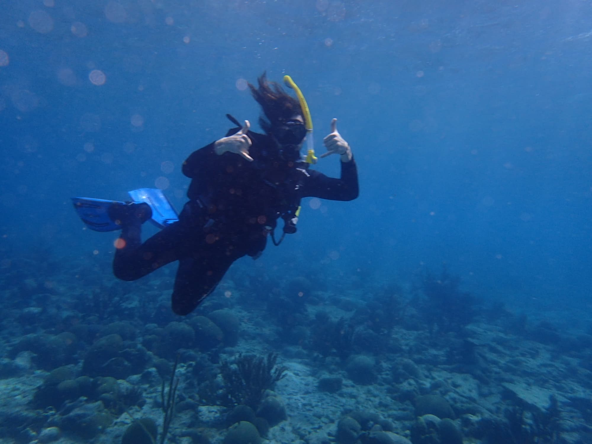 Discovery Place aquarist Matt Lowder, a UNC Charlotte alumnus, participates in research trips to the Caribbean that involve University faculty and students.